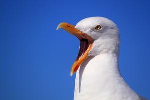 seagull-249638_1280.jpg